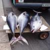 Рыбный день в Палермо. Глава из книги «Страна Лимония»