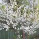 Дышите глубже! Кедринское ЛИТО отчиталось за весну