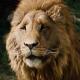 Под маской льва или Народ, надень очки!