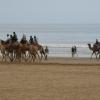 Марокко в мае. «В королевстве всё тихо и складно» — 2