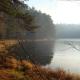 Памятнику лесоводства требуется природоохранный статус