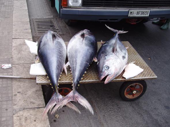 Рыбный день в Палермо1