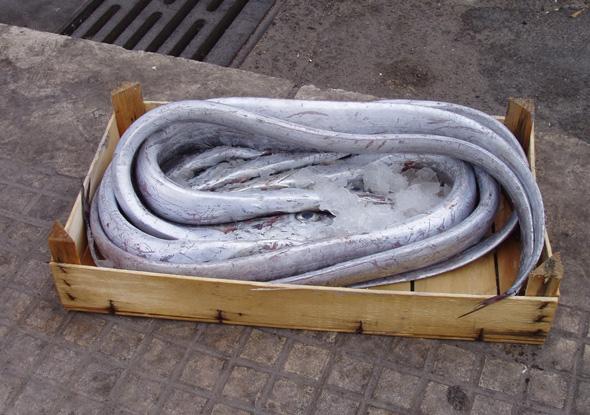 Рыбный день в Палермо3