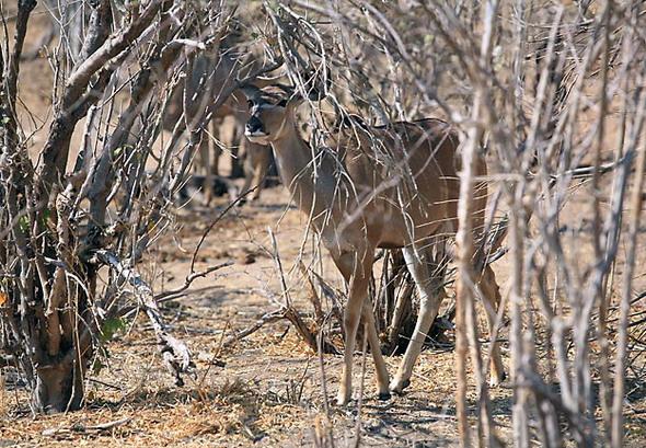 Ботсвана-03