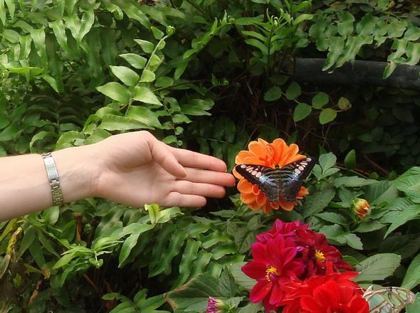 Тенерифе Бабочки 1