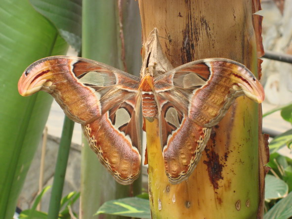 Тенерифе Бабочки 2