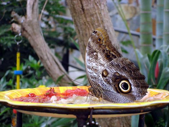 Тенерифе Бабочки 3