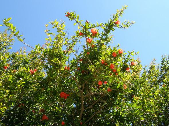Мальта Сад